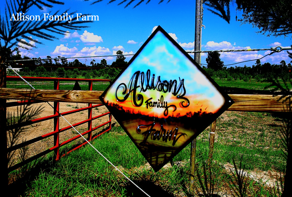 Allison Family Farm